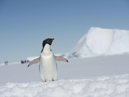 An Adelie Penguin, Pygoscelis Adeliae, on Fast Ice in the Weddell Sea-Keenpress-Photographic Print