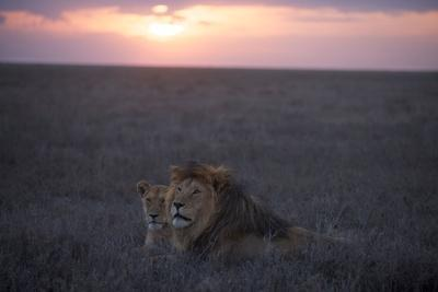 https://imgc.artprintimages.com/img/print/an-adult-male-lion-with-a-female-from-the-kibumu-pride_u-l-polr0i0.jpg?p=0