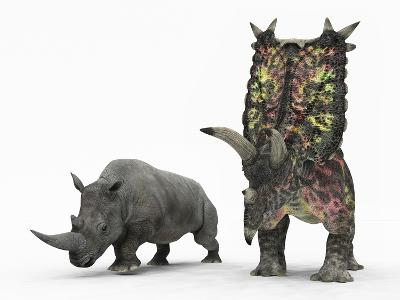 An Adult Pentaceratops Compared to a Modern Adult White Rhinoceros-Stocktrek Images-Photographic Print