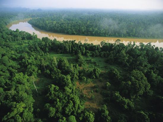 An Aerial View of Borneo Asian Elephant Habitat-Tim Laman-Photographic Print