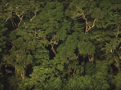 An Aerial View of the Rain Forest in Nouabale-Ndoki National Park-Michael Nichols-Photographic Print