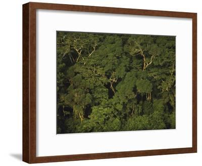 An Aerial View of the Rain Forest in Nouabale-Ndoki National Park-Michael Nichols-Framed Photographic Print