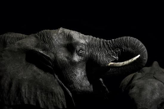 An African Elephant Emerges from the Dry Season Darkness to Drink at a Waterhole-Jason Edwards-Photographic Print