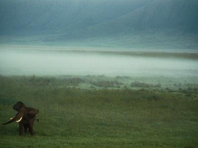 An African Elephant in the Ngorongoro Crater-Chris Johns-Photographic Print