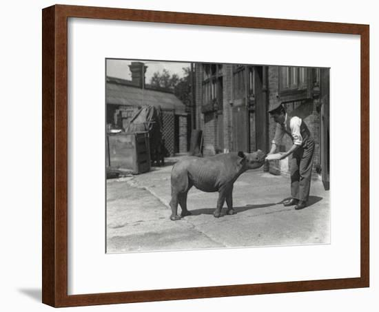 An African Rhinoceros, Kathlene, and Keeper Harry Warryck at Zsl London Zoo, September 1928-Frederick William Bond-Framed Photographic Print