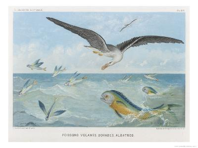 An Albatross at Sea Preying on Flying Fish-P. Lackerbauer-Giclee Print