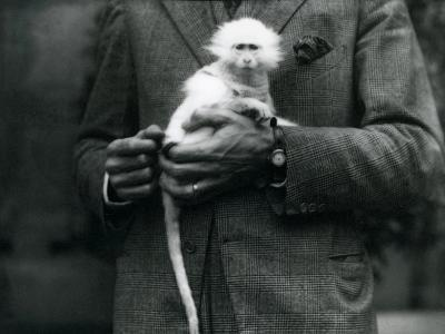 An Albino Old World Monkey, Genus Ceropithecus, Being Held at London Zoo, July 1922-Frederick William Bond-Photographic Print
