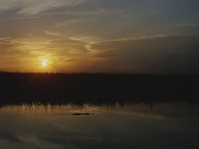 An Alligator in Silhouette Glides Through Wetlands at Sunset-Raul Touzon-Photographic Print