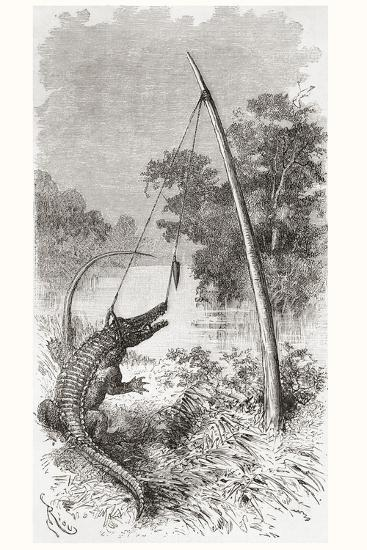 An Alligator Trap on the Oyapock or Oiapoque River--Giclee Print
