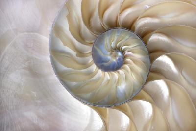 An Amazing Fibonacci Pattern in a Nautilus Shell- Tramont_ana-Photographic Print