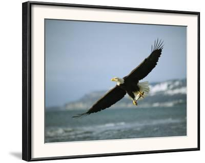 An American Bald Eagle in Flight over Water with a Fish in its Talons-Klaus Nigge-Framed Photographic Print