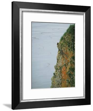 An American Bald Eagle Perches on its Clifftop Nest-Klaus Nigge-Framed Photographic Print