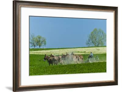 An Amish Farmer Cultivates His Field-Richard Nowitz-Framed Photographic Print