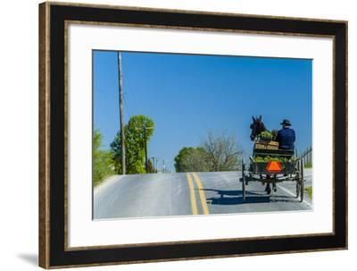 An Amish Man Rides in a Horse Carriage Driving to Leola Auction, Lancaster County, Pennsylvania-Richard Nowitz-Framed Photographic Print