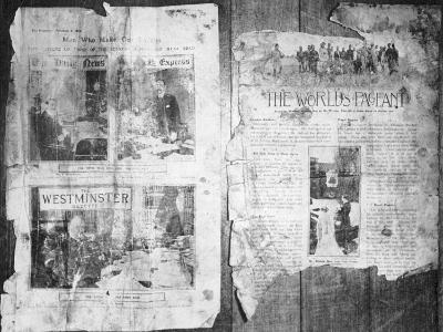 An Antarctic Bystander--Photographic Print