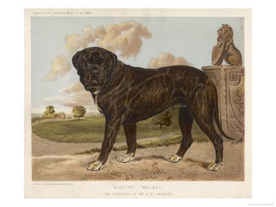 An Aristocratic Mastiff in the Grounds of a Stately Home--Giclee Print