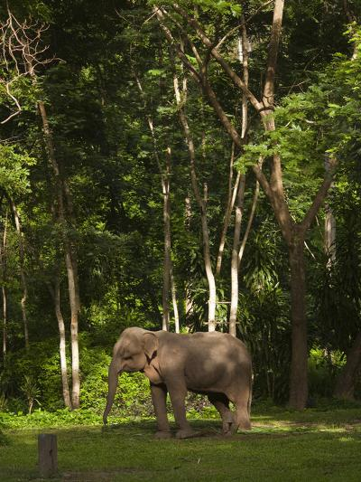 An Asian Elephant, Elephas Maximus, Standing in a Wooded Setting-Karen Kasmauski-Photographic Print