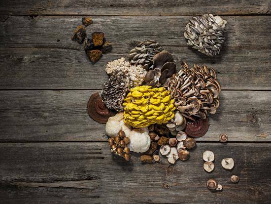 An assortment of popular mushrooms.-Rebecca Hale-Photographic Print