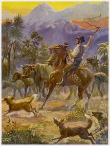 An Australian Bushman Rounds Up His Cattle with the Assistance of His Dogs