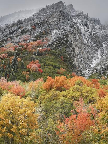 An Autumn Snowfall Decorates the Mountainsides and Trees of Little Cottonwood Canyon-Don Grall-Photographic Print