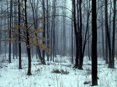 An Early Winter Forest Scene in Eastern Ontario-Kenneth Ginn-Photographic Print
