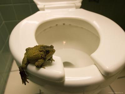 An Eastern American Toad in a Motel Room Bathroom-Joel Sartore-Photographic Print