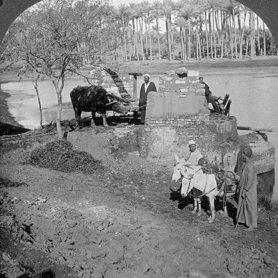 An Egyptian Sakieh, or Ox-Driven Bucket Pump, Egypt, 1905-Underwood & Underwood-Photographic Print