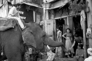 An Elephant Collects Tips from the Prostitutes on Falkland Road for Good Luck, Mumbai, 1980