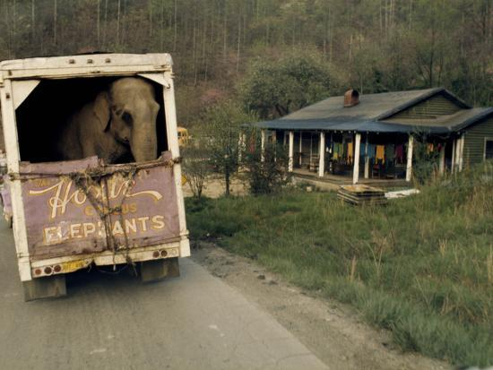 An Elephant Rides to the Next Show in the Back of a Circus Truck-Jonathan Blair-Photographic Print