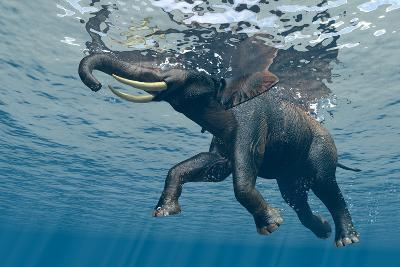An Elephant Swims Through The Water-1971yes-Photographic Print