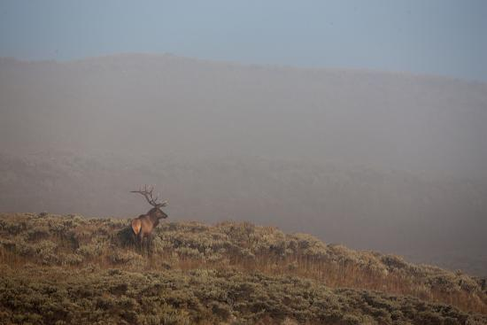 An Elk Stands on a Hill in Thick Fog-Tom Murphy-Photographic Print