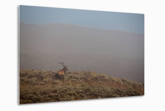 An Elk Stands on a Hill in Thick Fog-Tom Murphy-Metal Print
