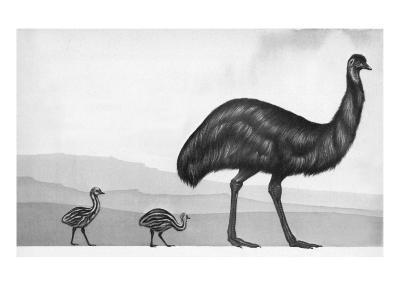 An Emu with Her Chicks-English School-Giclee Print