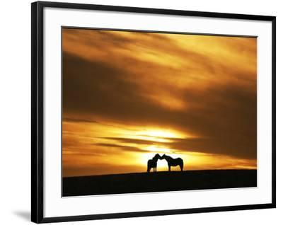 An Equine Kiss-Adrian Campfield-Framed Photographic Print