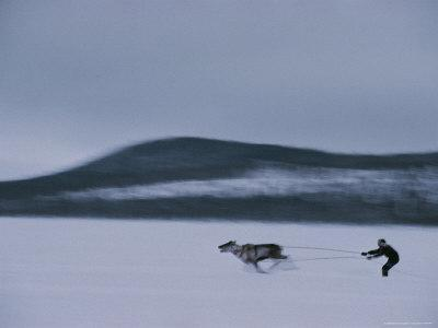 https://imgc.artprintimages.com/img/print/an-ethnic-sami-races-a-reindeer-across-the-snowy-tundra_u-l-p4q1tx0.jpg?p=0