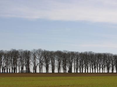 An Expanse of Blue Sky Above a Row of Bare Trees and Green Grass--Photographic Print