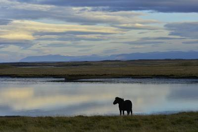 An Icelandic Horse Stands Along the Shore at Low Tide-Raul Touzon-Photographic Print