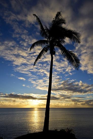An Idyllic Palm Tree Silhouette Overlooking the Ocean at Sunset-Jason Edwards-Photographic Print