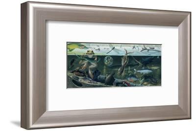 An Illustration of Freshwater Pond Life-Ned M. Seidler-Framed Giclee Print