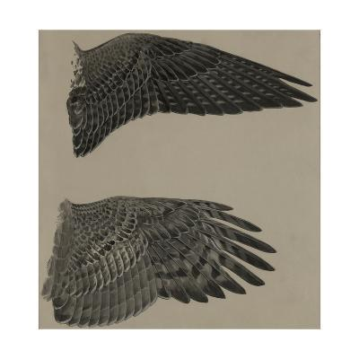 An Image of the Wings of a Falcon (Top) and a Goshawk Hawk (Lower)-Louis Agassi Fuertes-Giclee Print