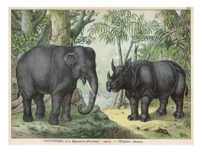 An Indian Elephant and a Rhinoceros--Giclee Print