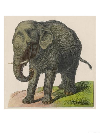 An Indian Elephant--Giclee Print