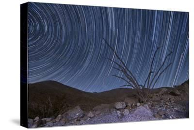 An Octotillo Backdropped by Star Tails in Anza Borrego Desert State Park