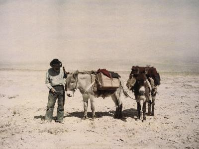 An Old Prospector with His Mules-B^ Anthony Stewart-Photographic Print