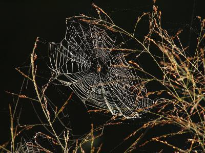 An Orb Weaving Spider Sitting in the Center of Its Web-George Grall-Photographic Print