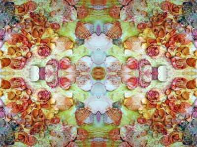 An Ornamental Symmetric Montage from Flowers and Seashells-Alaya Gadeh-Photographic Print