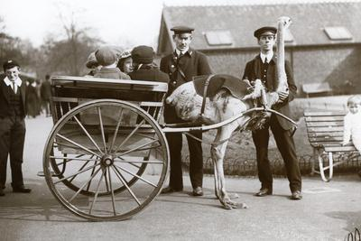 https://imgc.artprintimages.com/img/print/an-ostrich-cart-ride-with-children-and-keepers-george-blore-and-william-dexter-at-london-zoo_u-l-pukmxa0.jpg?p=0