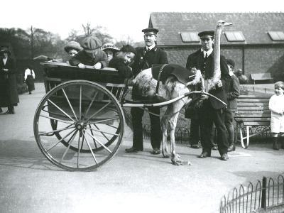 An Ostrich Cart Ride with Children and Keepers George Blore and William Dexter at London Zoo-Frederick William Bond-Photographic Print