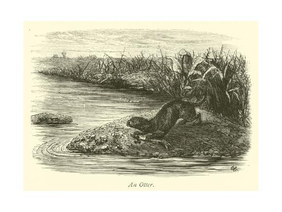 An Otter--Giclee Print