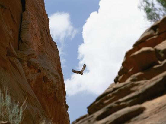 An Raven Soars Above the Gorges and Slot Canyons Along the Arizona/Utah Border-Bill Hatcher-Photographic Print